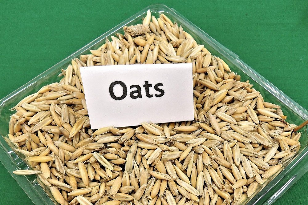 7 Facts About Oats That Might Surprise You